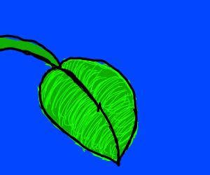 close up of a pot leaf