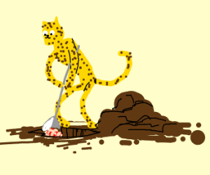 leopard digging for a brain