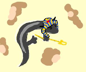 Egyptian salamander