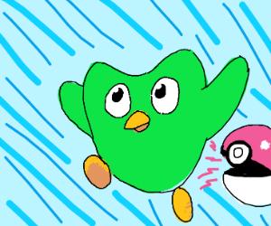 Duolingo bird but it's a Pokemon