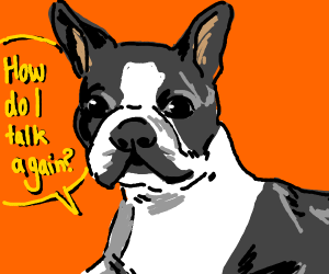 Boston terrier learns to speak