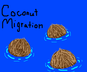 Coconut floating on the sea