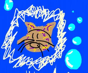 Enchanted Catfish