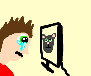 Man watches cat videos and cries