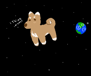 Dog in space