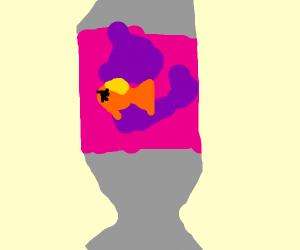 Dead fish in lava lamp