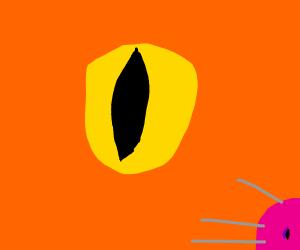 A cat's eye