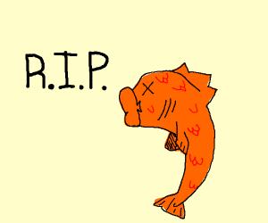 RIP goldfish