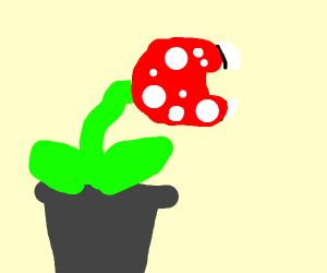 A very content Piranha Plant(Mario)