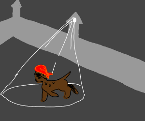 a pirate dog runs away from the light