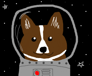 Dog with space helmet