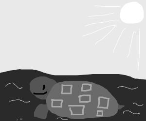turtle swimming in the sea