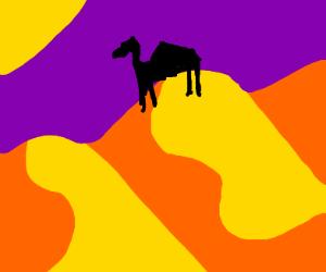 silhouette of a camel in a dessert