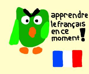 Duolingo bird threatens you to learn French