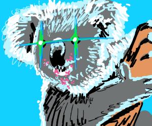 Koala is pissed off