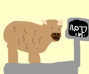 Heavy Bison