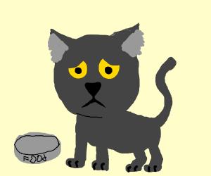 sad black kitty cat