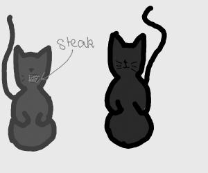 Grey cat eats steak in front of black cat