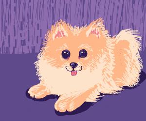 Fwuffy doggo