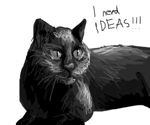 Cat needs ideas