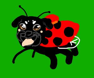 ladybug with pug face