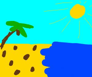 Coconut grows on a beach