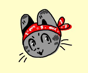 grey cat wearing red bandanna
