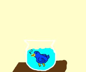 fishbowl-bird