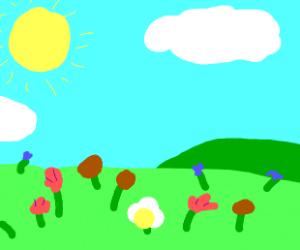 Nice field of flowers in the sun.