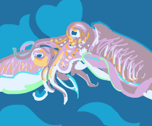 two cuttlefish going to hug