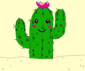 Wholesome cactus friend