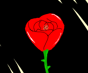 A flower in the dark