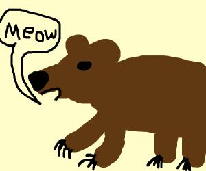 Bear meows