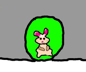 Hamster in a hamster ball