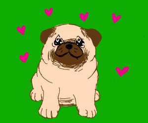 Pug loves you