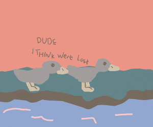 lost ducks