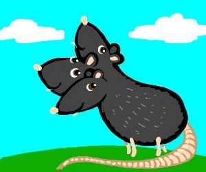 3 headed rat