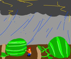 Raining on giant melons
