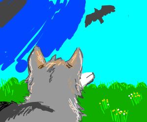 Wolf observes bird