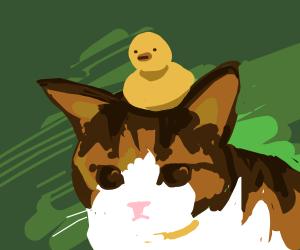 Bird on a Cat's head