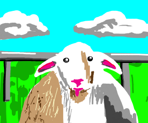 Lamb loves you
