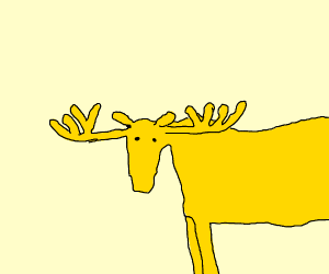 golden shining moose