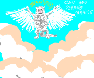 angel cat asked to be praise