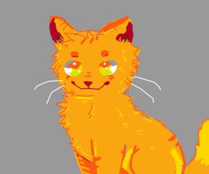 Orange Cat Smiling At You
