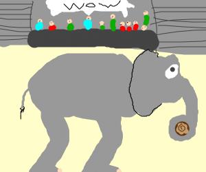 Elephant amazes people by lifting a log