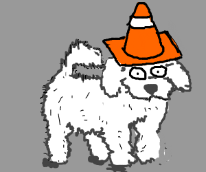Fluffy dog with cone on head