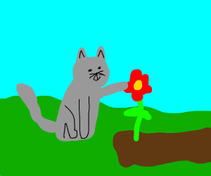 cat is touching a red flower