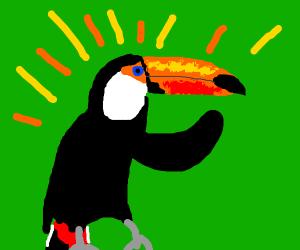 Powerful toucan.