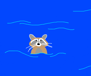 raccoon in the ocean
