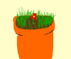 small flower in a grassy plantpot